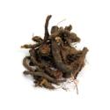 Knotgrass Roots ( Beekh e Anjbar )
