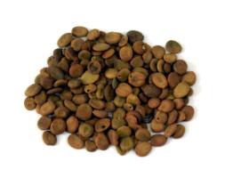 Lebbek Tree Seeds ( Tukhm-e-Saras )