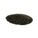 Plumed Cockscomb ( Sarwali )
